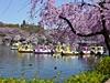 春到来!吉祥寺・お花見特集 桜を見ながら食べたい-とっておきテークアウトごはん!